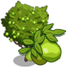 Ruby Guava Tree-icon