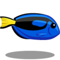 ColorfulFish Blue Tang-icon