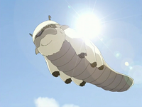 Appa soaring