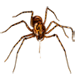 Item spittingspider 01