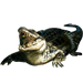 Item cubancrocodile 01