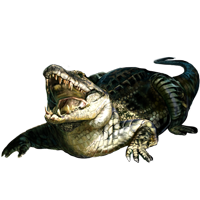 Huge item cubancrocodile 01