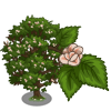 English Elm-icon