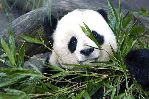 10 fotos de animales en peligro de extinción | Eco13