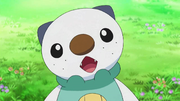 EP695 Oshawott de Ash confundido