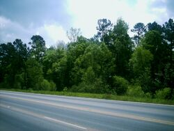 Piney Woods 2