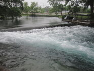 Comal River in Landa Park, New Braunfels IMG 3264