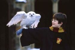 Harry-potter-edvige