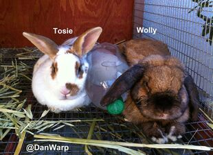 DanWarp&#39;s Bunnies