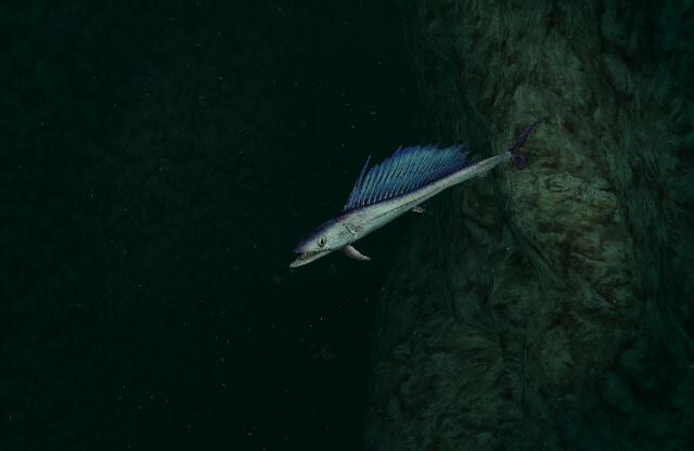 Longnose Lancetfish - Endless Ocean Wiki Oarfish Skull