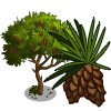Umbrella Pine-icon
