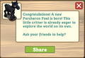 Percheron foal message