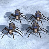 Spiderlings 3