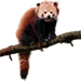 Item redpanda 01