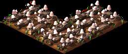 Mushroom3.png