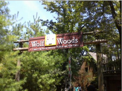 Wolf woods