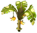 Citronana Tree
