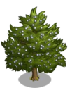 Eastern Red Cedar2-icon