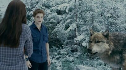 Seth-Wolf Edward Bella