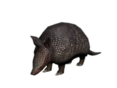 230px-Armadillo.png