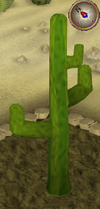 Cactus7