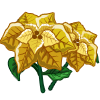 Golden Poinsettia-icon