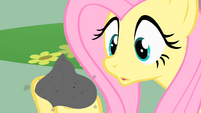 Fluttershy holds Philomena's ashes S01E22