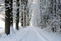Winter-Path