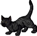 Darkstripe.apprentice