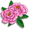 Peony-icon