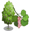 European Aspen Tree-icon