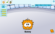 Orange puffle care card