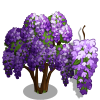 Purple Wisteria Tree-icon