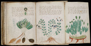 Voynich Manuscript (170)
