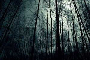 Dark-forest-night-image-31001