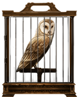 Barn-owl-lrg