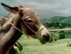 Film.Burro
