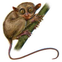 Huge item tarsiers 01