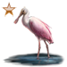 Item roseatespoonbill bronze 01