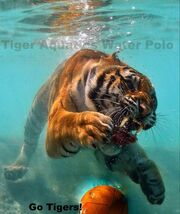 Tiger with WP ball