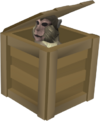 Crate (monkey)