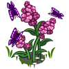 Purple Butterflies-icon