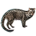 Item asianpalmcivet 01