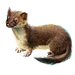 Item stoat 01