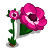 Anemone-icon