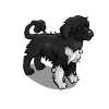 Portuguese Water Dog-icon