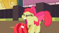 Apple Bloom about to grab the bowling ball with her mouth S2E05