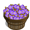 Royal Forget-Me-Not Bushel-icon