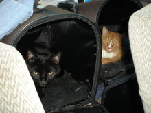 Cats backseat
