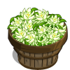Night Cereus Bushel-icon